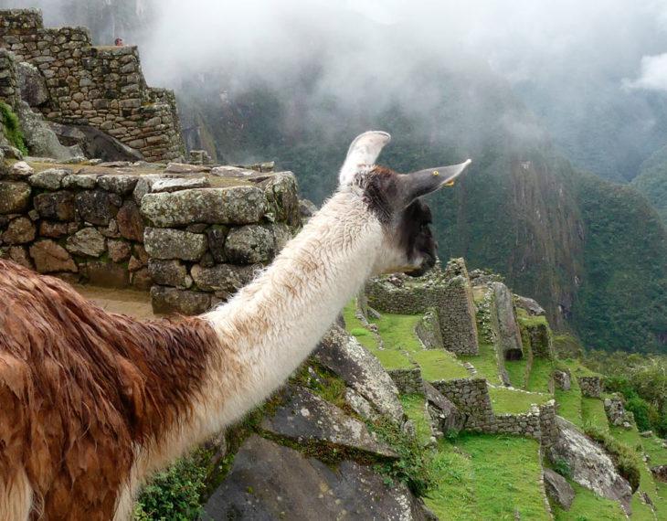 Andean Treasures 13 Dagen