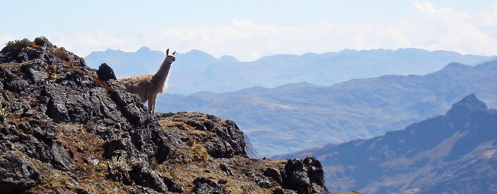 Sentier Lares & Inca 4 Jours