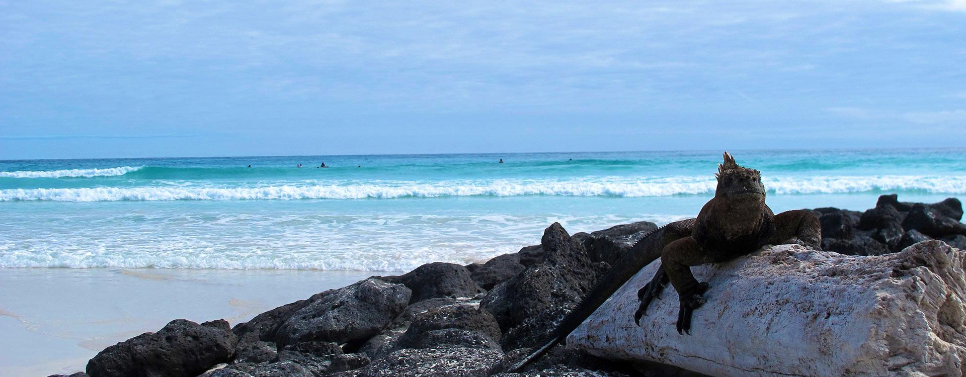 Galapagos Multi Deportivo 10 Días