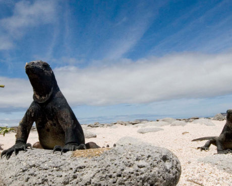 The Best of Galapagos Active Travel 7 Days